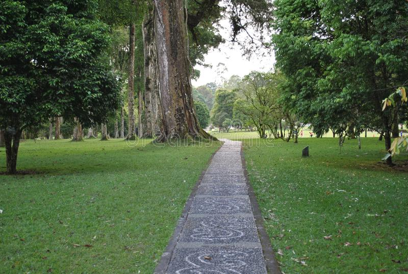 The pathway in the botanical garden of Bedugul Bali royalty free stock images