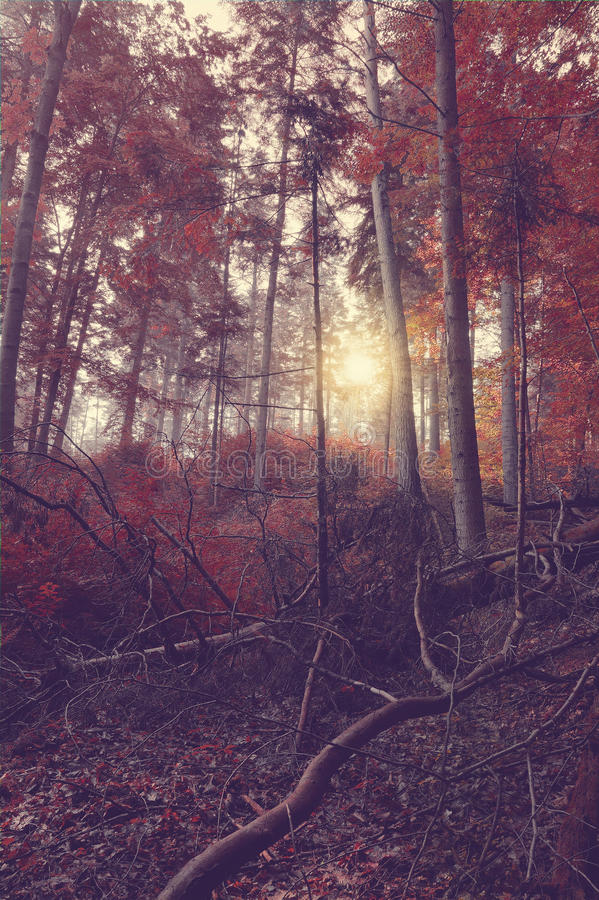 Beauty forest with sun rays in the morning royalty free stock photo