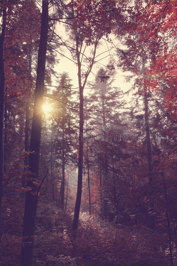 Beauty forest with sun rays in the morning stock photo