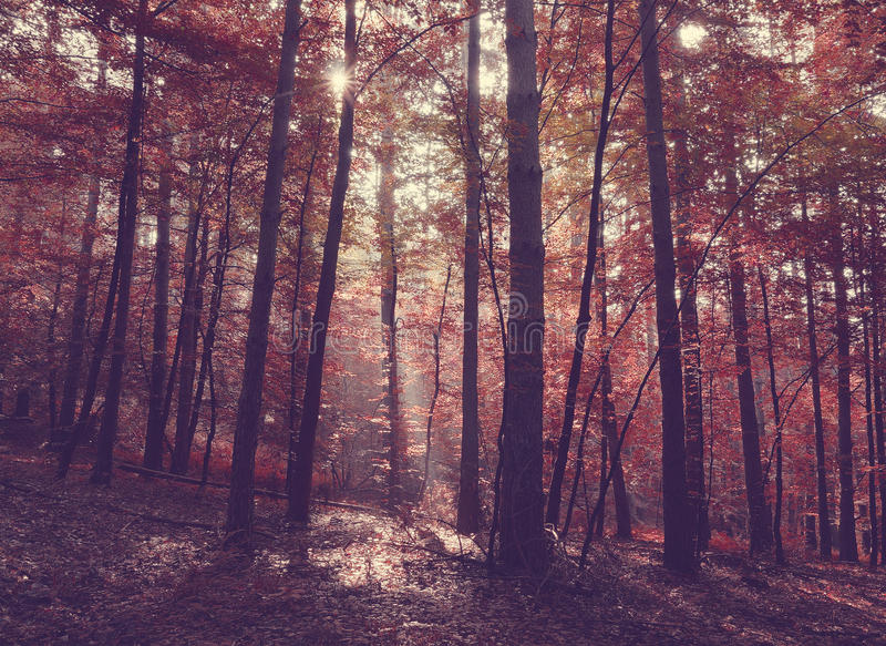 Beauty forest with sunrays in the morning stock photos