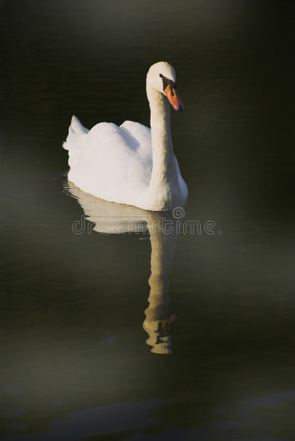 Beauty And Grace Stock Images
