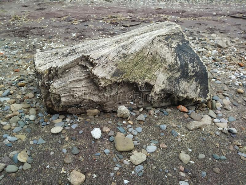 Beauty of the Great Lakes. This lonely log, set in sand on the beach of Turtle Island on Lake Erie. One of Ohio& x27;s greatest resources, this shows the majesty royalty free stock image