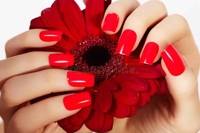 Beauty hands with red fashion manicure and bright flower. Beautiful manicured red polish on nails royalty free stock image