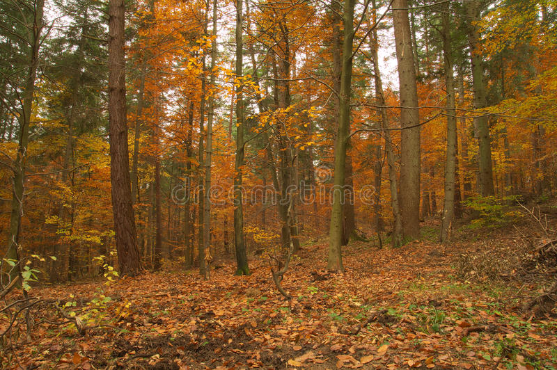 Beauty landscape autumn forest view royalty free stock photos