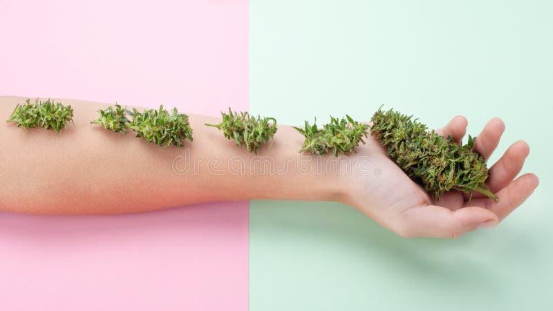 Beauty marihuana-concept, mooie vrouwelijke hand met verse groene cannabisknoppen, organische cosmetica uit cannabisinflorescenti royalty-vrije stock foto