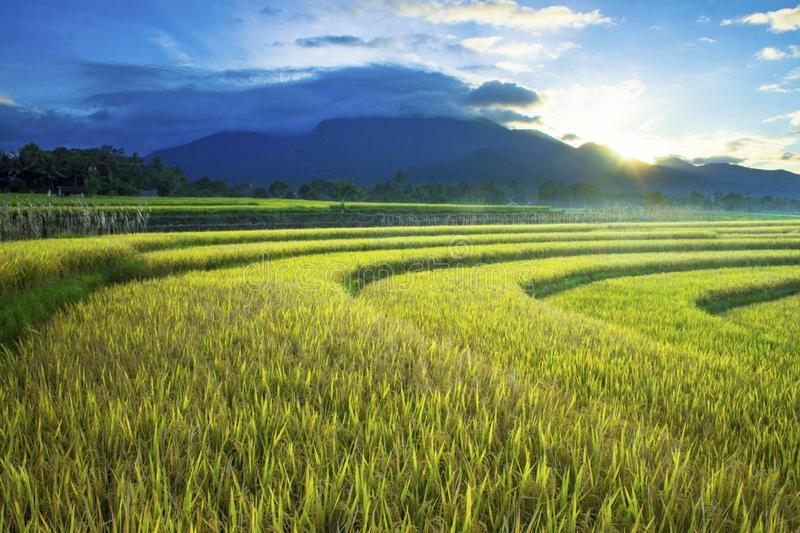 Beauty morning in mountain in north bengkulu indonesia. Morning sky at rice fields in north bengkulu indonesia, beauty nature color and time in the morning royalty free stock images