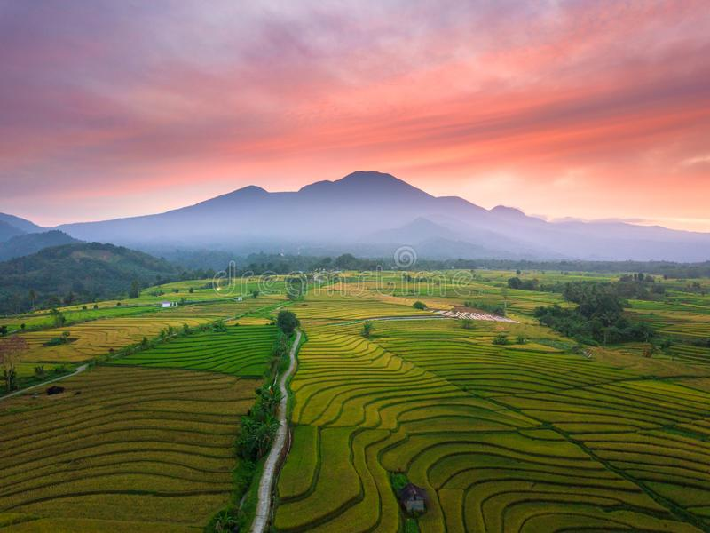 The beauty of the morning with the sunshine in the yellow rice paddies under the blue mountains and the beautiful summer sky in be stock photography