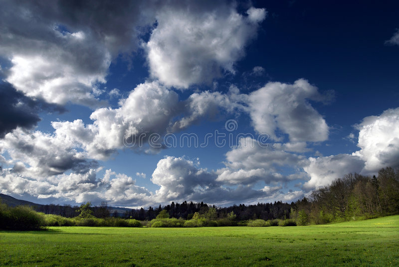 Download Beauty nature stock image. Image of forest, grass, declined - 5177867