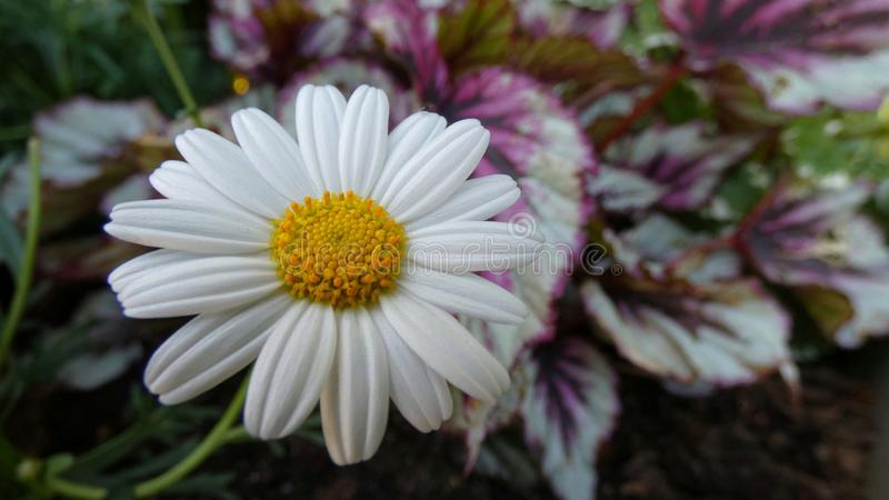 Beauty In nature. Flower, white, whiteflower, closeup, macro, macrophoto, flowerlovers, background, backgrounds, birthday, card, cards, beautiful stock photos