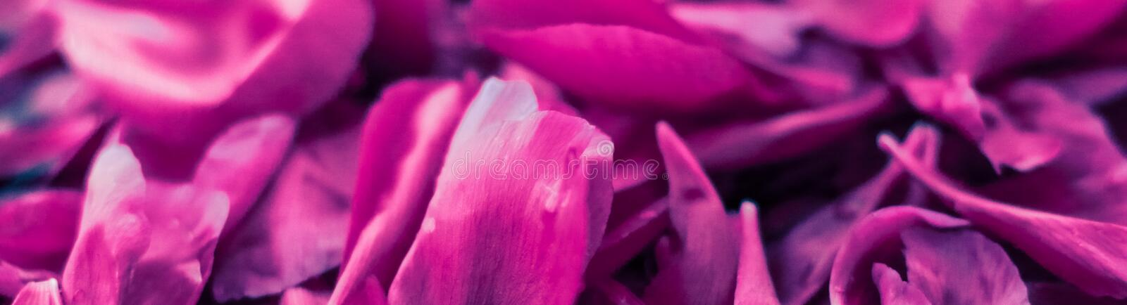 Abstract floral background, purple flower petals in water. Beauty of nature, dream garden and wedding backdrop concept - Abstract floral background, purple stock photography