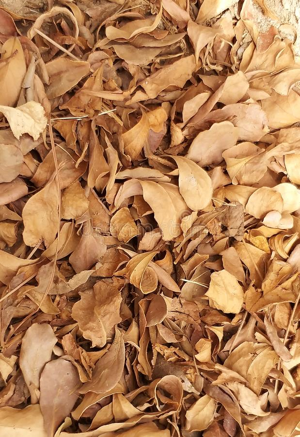Beauty of nature. dry leaves in the outdoor royalty free stock photo