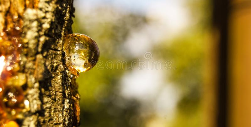 Resin on wood royalty free stock images