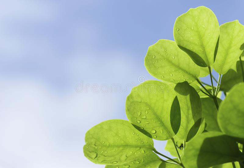 The beauty of nature leaves green blur. In the spring Under the morning light. Use as background and wallpapers. Sky background.  stock photos
