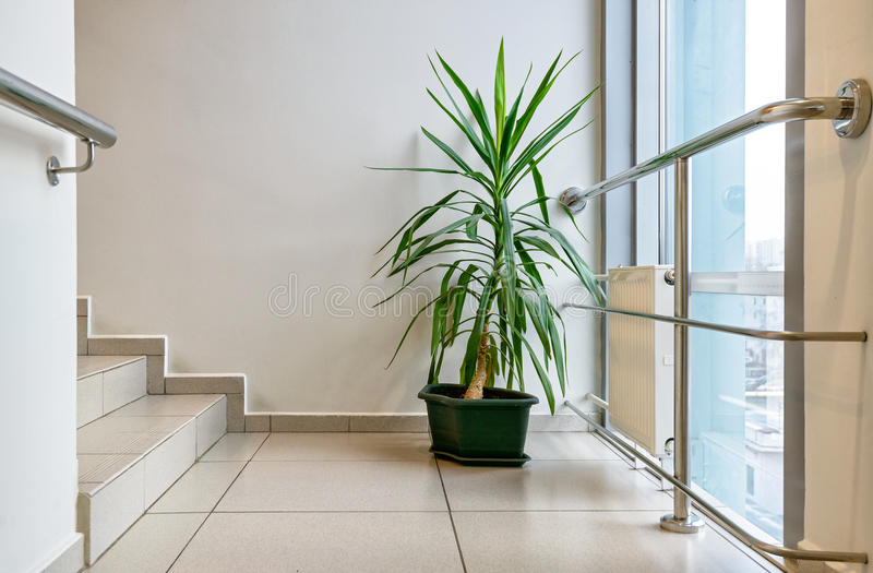 Beauty plant in the business office. Beauty plant in the modern business office stock image
