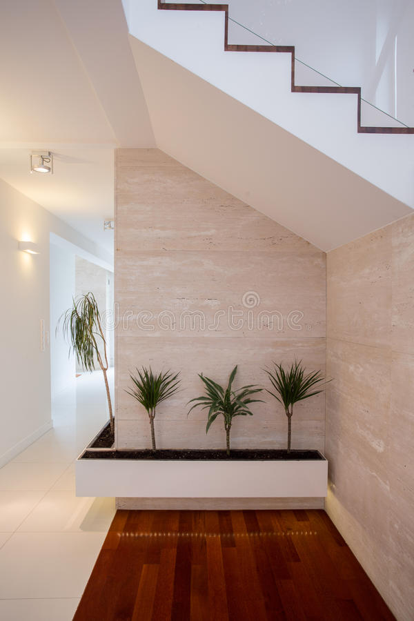 Beauty plants in bright corridor stock photography