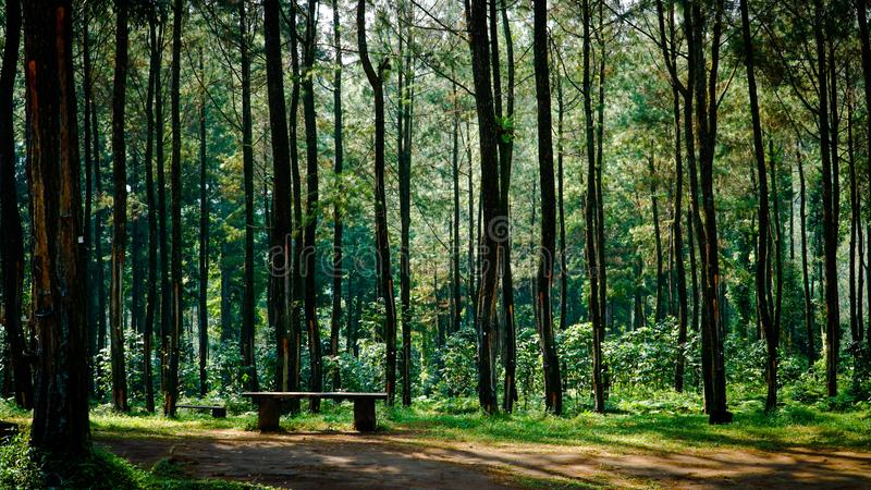 The beauty of Sikembang Park, Batang, Central Java, Indonesia. stock images