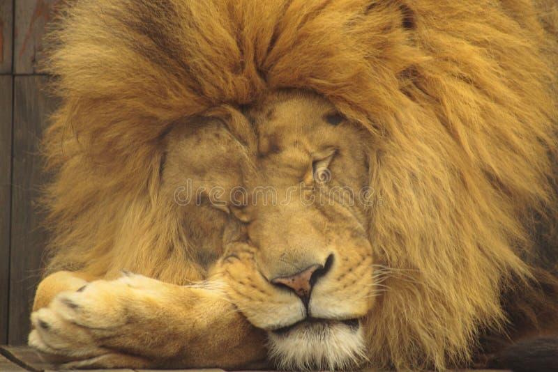 beauty sleeping στοκ εικόνες με δικαίωμα ελεύθερης χρήσης
