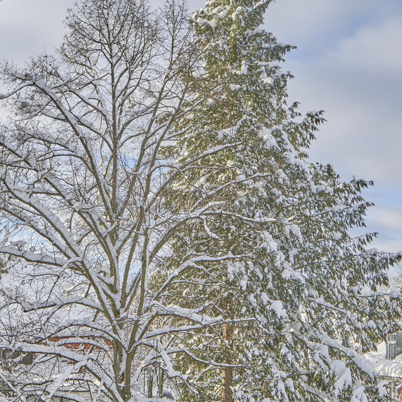 The Beauty of Snow. A series of four images, all fairly similar taken from the balcony of a flat in Munich. Humans complain about the cold but these images show royalty free stock image