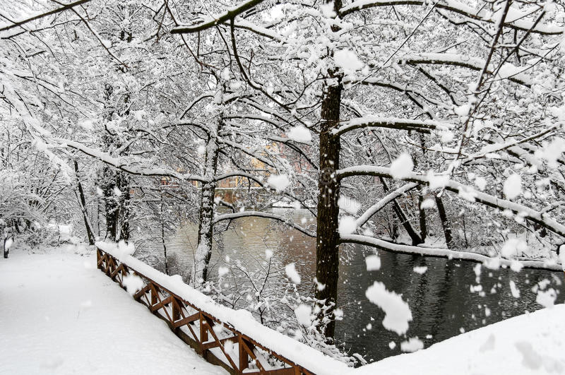 Beauty snowy scene-river and trees- huge snowflakes stock photo