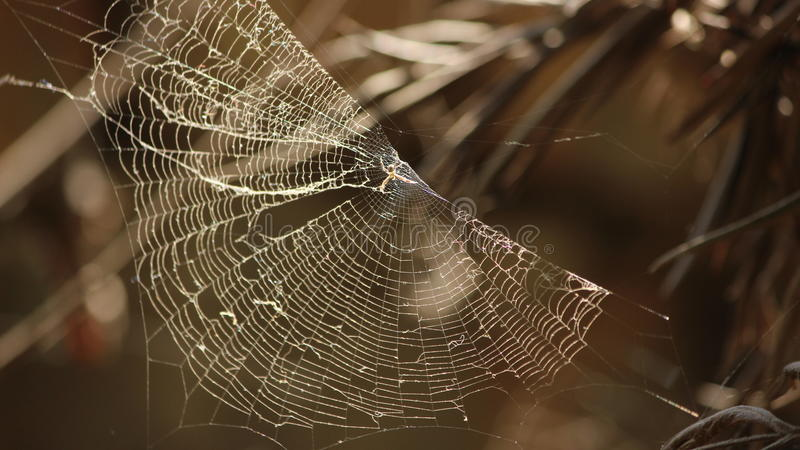 Beauty of spider royalty free stock photo