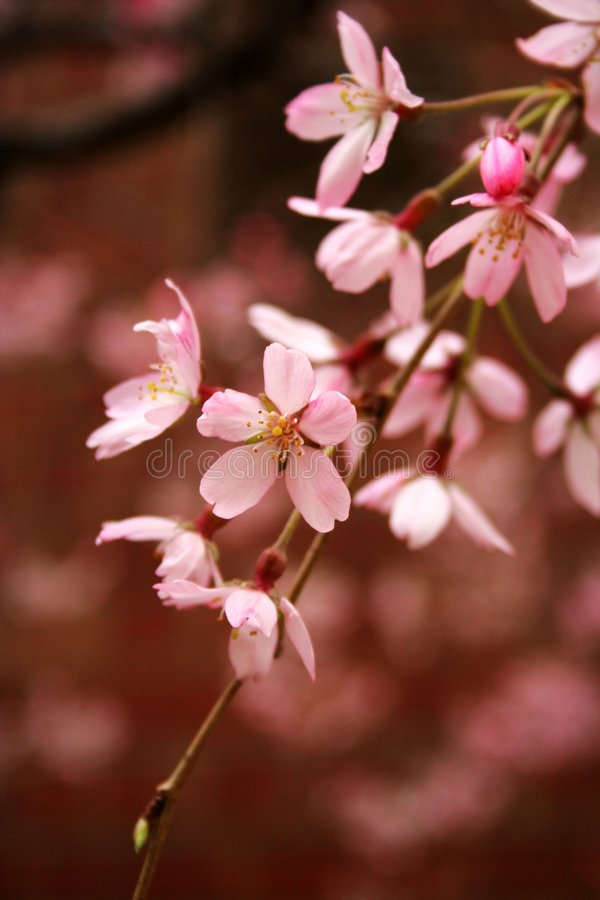 Beauty of Spring royalty free stock photos