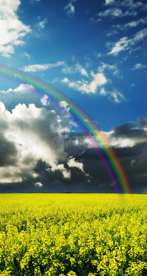Beauty of spring landscape yellow field stock photo