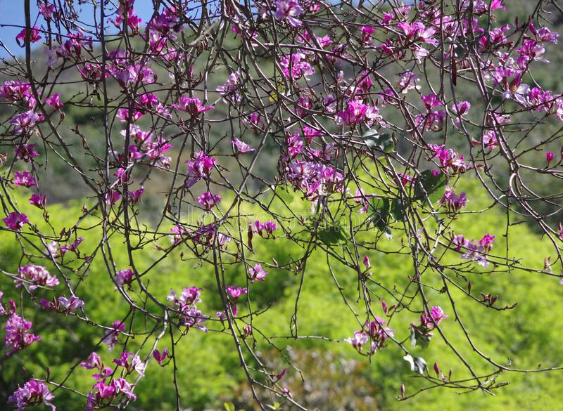 The Beauty of Springtime in Nature royalty free stock photo