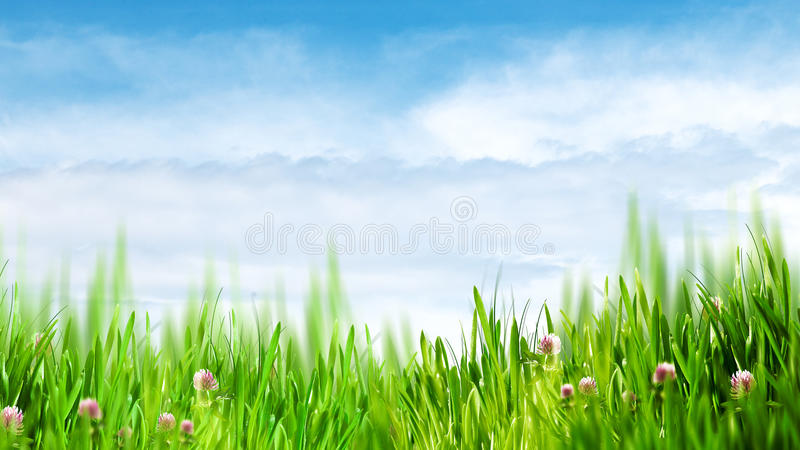 Beauty summer day stock image