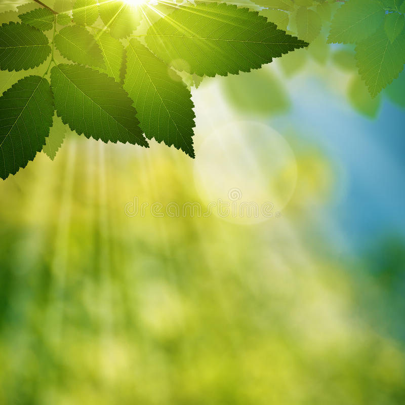 Beauty summer day in the forest royalty free stock photos