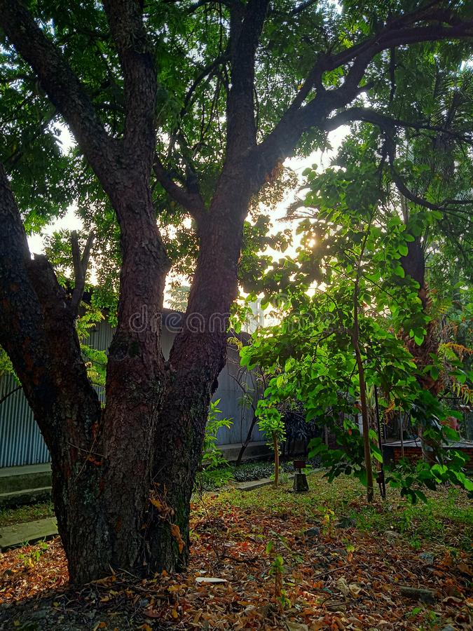 The beauty of the sun at sunrise. Cimahi City, Indonesia, August 28, 2019. The sun rises on the shady trees royalty free stock photography