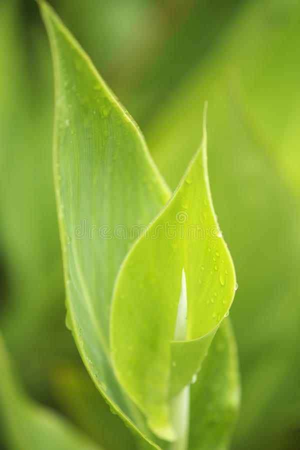 Beauty of Tender Green Leaves stock images