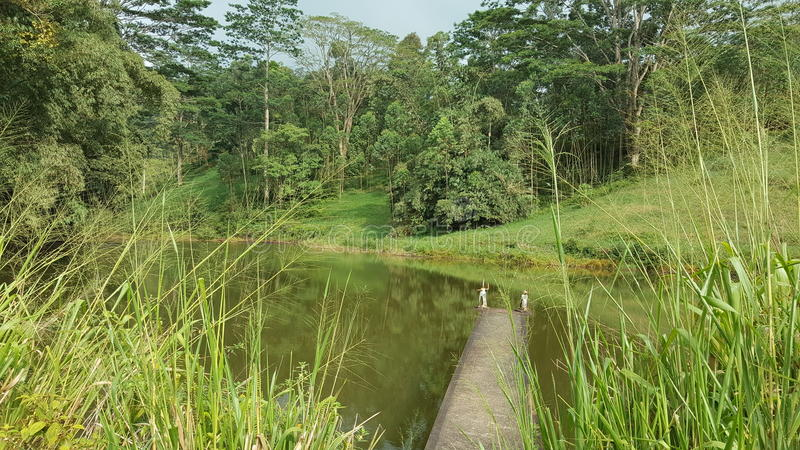 Beauty of up country in Sri Lanka. This beautiful site is located in Nawalapitiya - Dolosbage road, Central province, Sri Lanka. This lake is now called as royalty free stock image