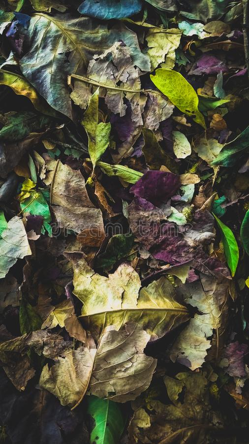 Beauty In Waste royalty free stock photo