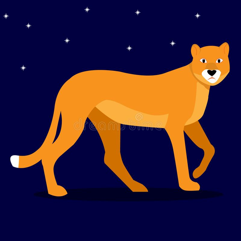 Beauty wild cat, companion of the king of beasts lion - lioness on the background of the night starry sky. vector illustration.  royalty free illustration