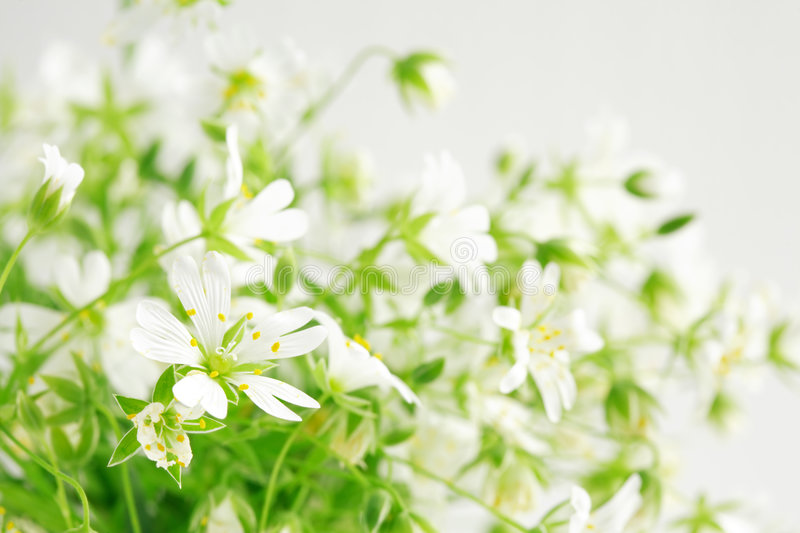 Beauty of wild flowers. Close-up of beautiful forest flowers stock image