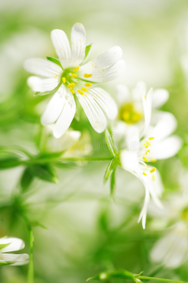 Beauty of wild flowers. Close-up of beautiful forest flowers stock photos