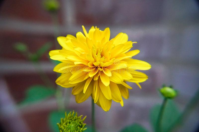 Beauty of yellow... royalty free stock images