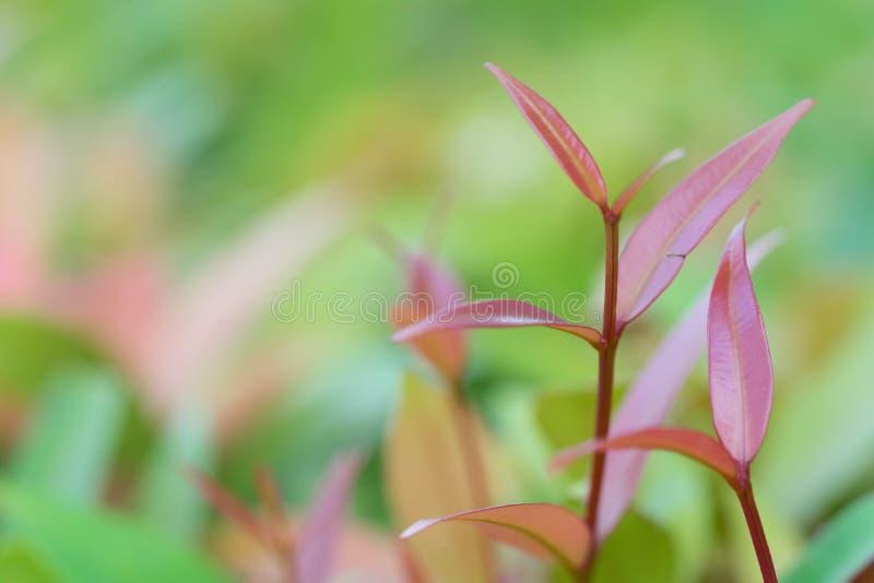 beautyful natuurlijke bloemen van het bladeren groene gebladerte stock foto's