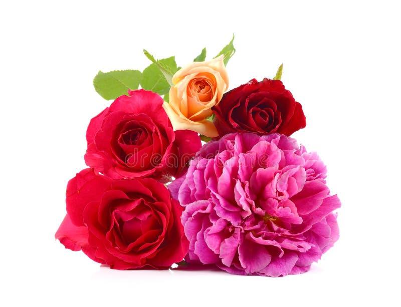Beautyful rosor på vit, blom- bakgrund, hälsningkort, tapet royaltyfria foton