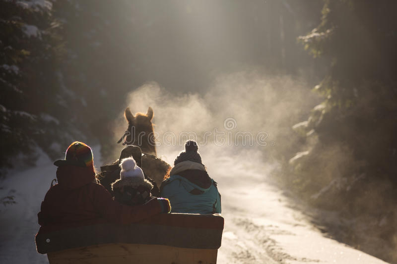 Beautyful sleigh in the winter trough the forest. stock photos
