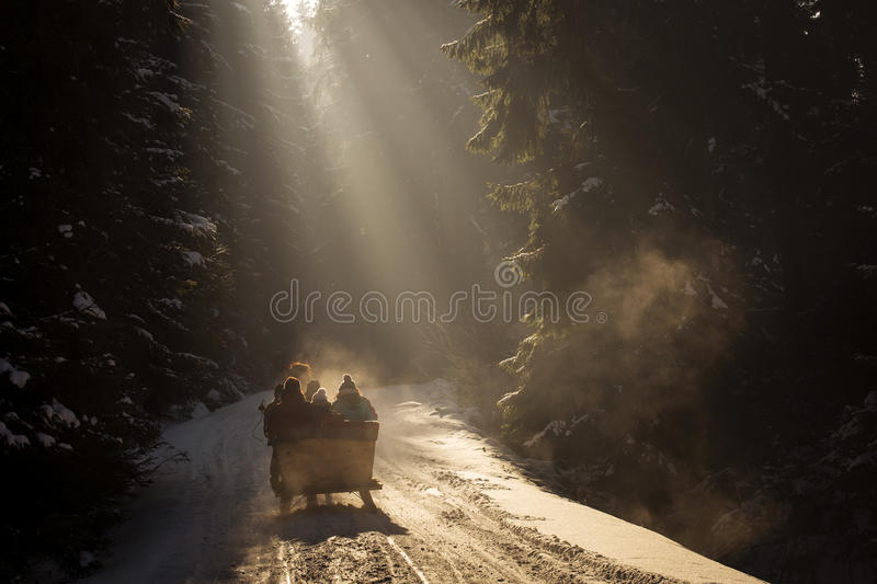Beautyful sleigh in the winter trough the forest. stock image