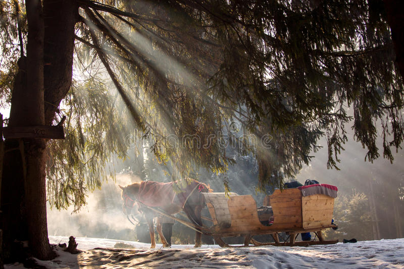 Beautyful sleigh in the winter trough the forest. stock photography