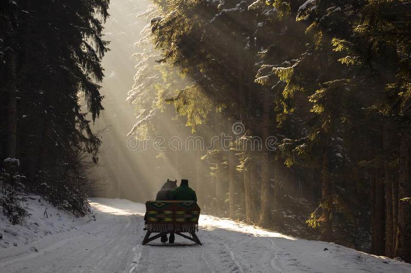 Beautyful sleigh in the winter trough the forest with beautiful background full of rays. stock photos