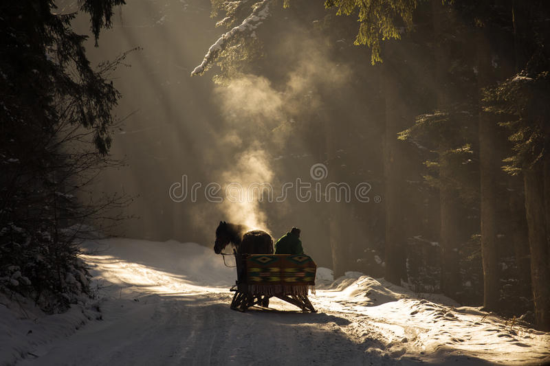 Beautyful sleigh in the winter trough the forest with beautiful background full of rays. stock image