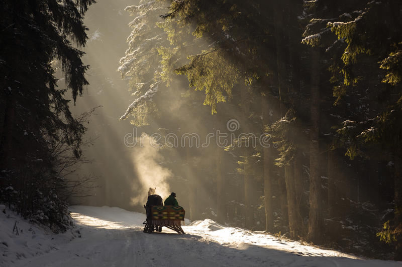 Beautyful sleigh in the winter trough the forest with beautiful background full of rays stock photos
