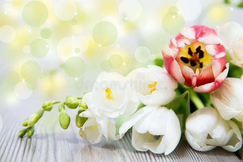 Beautyful spring flower stock photo