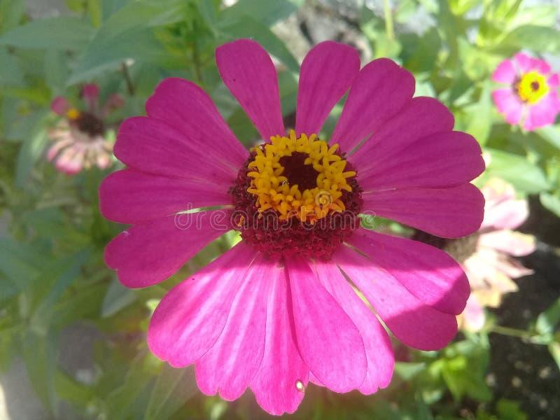 Beautyfull pink flower green leaf stock image