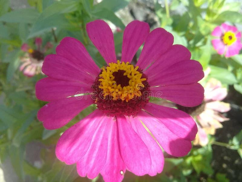 Beautyfull pink flower green leaf royalty free stock image