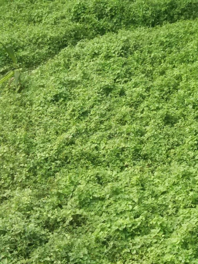 Beautygreen стоковое изображение
