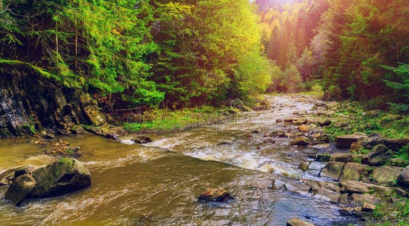 Beautyiful autumh风景 绿色植被和松树森林包围的小山河在夏天 库存图片